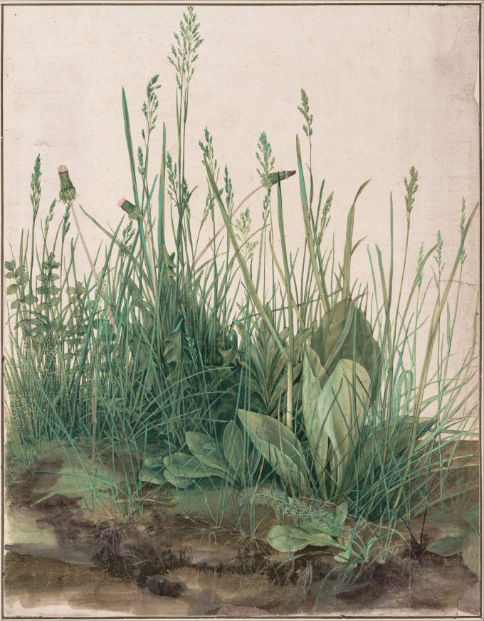 Albrecht_Dürer_-_The_Large_Piece_of_Turf,_1503_-_Google_Art_Project