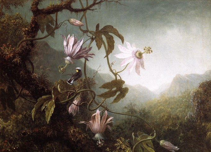 Hummingbird_Perched_near_Passion_Flowers_1870-1883