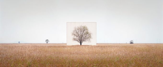 myoung_ho_lee-tree_3_from_the_series_tree_abroad