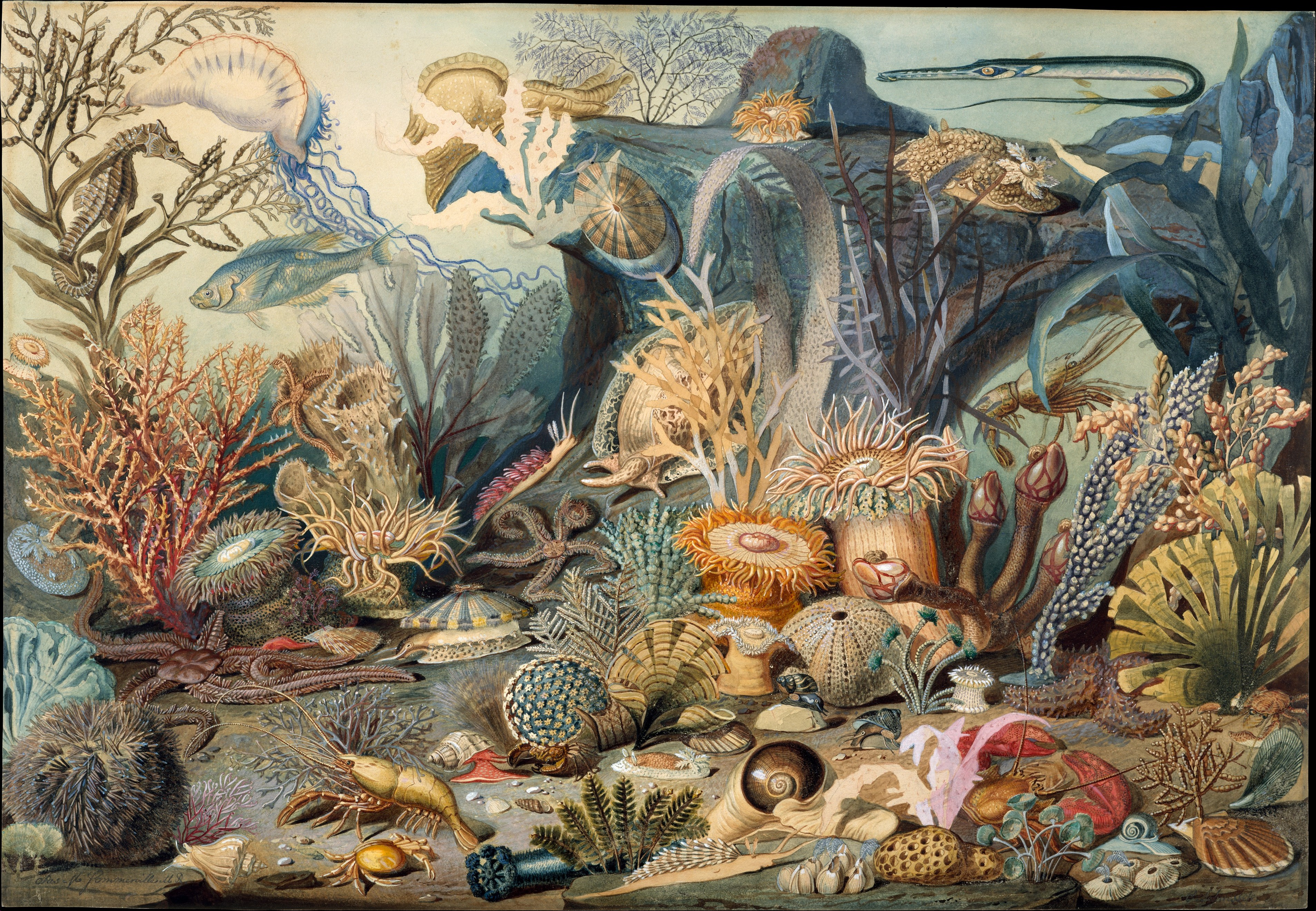 Watercolor and gouache painting, Ocean Life By James M. Sommerville