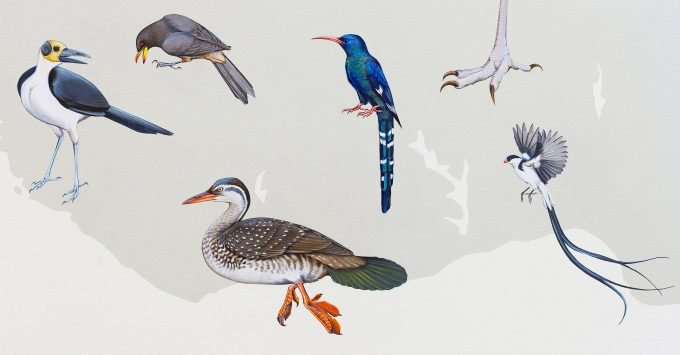 A detail from the wall of birds at the cornell lab of ornithology